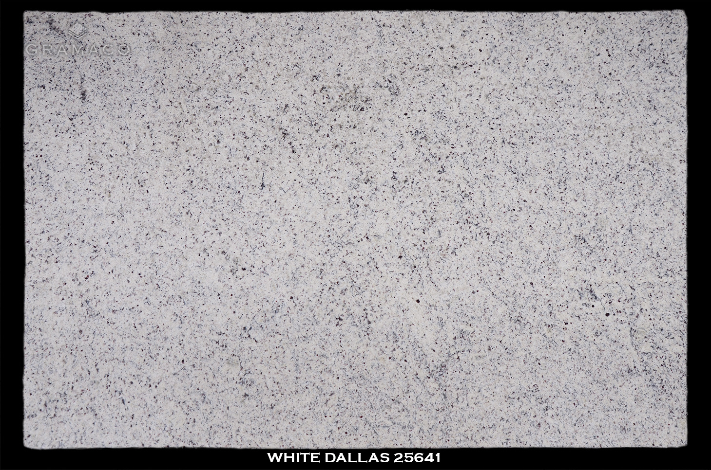 WHITE-DALLAS-25641