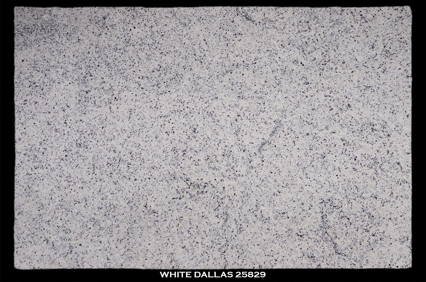 WHITE-DALLAS-25829