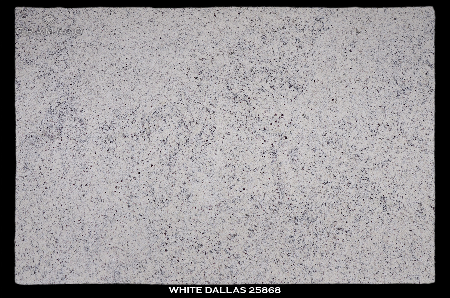 WHITE-DALLAS-25868
