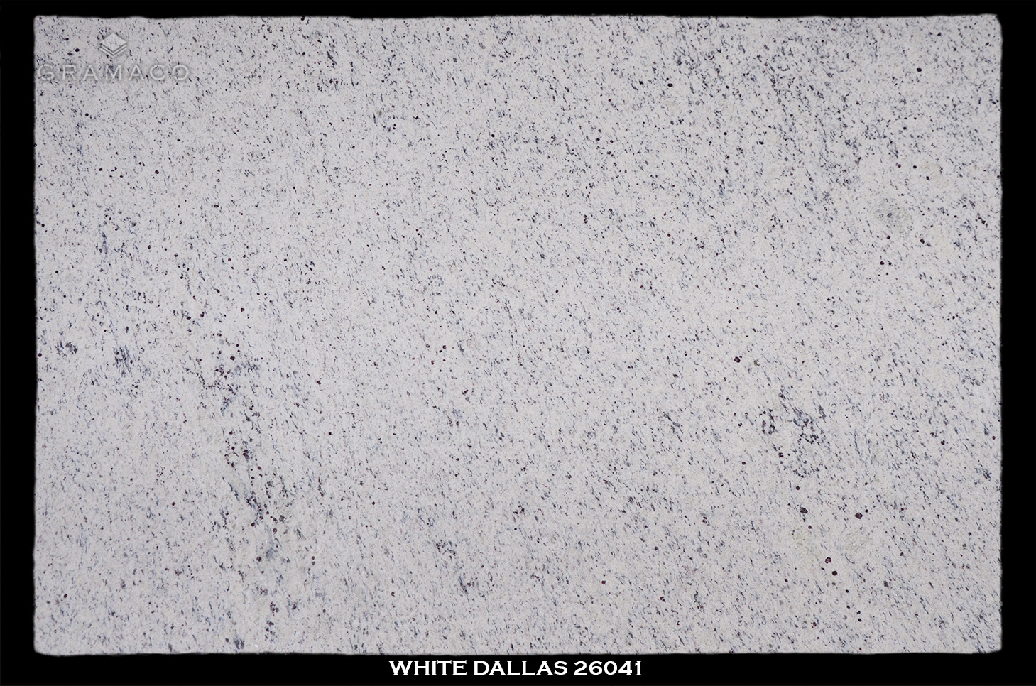 WHITE-DALLAS-26041