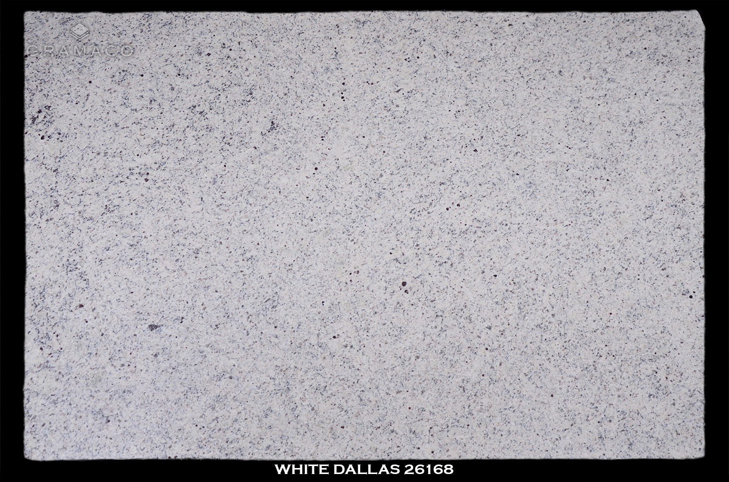 WHITE-DALLAS-26168